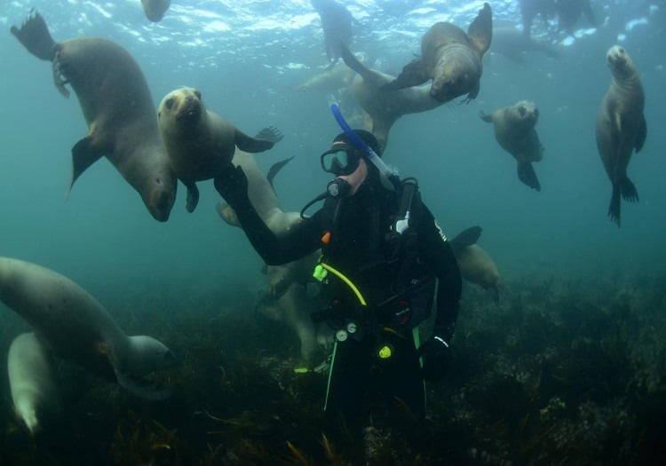 diving with sea lions
