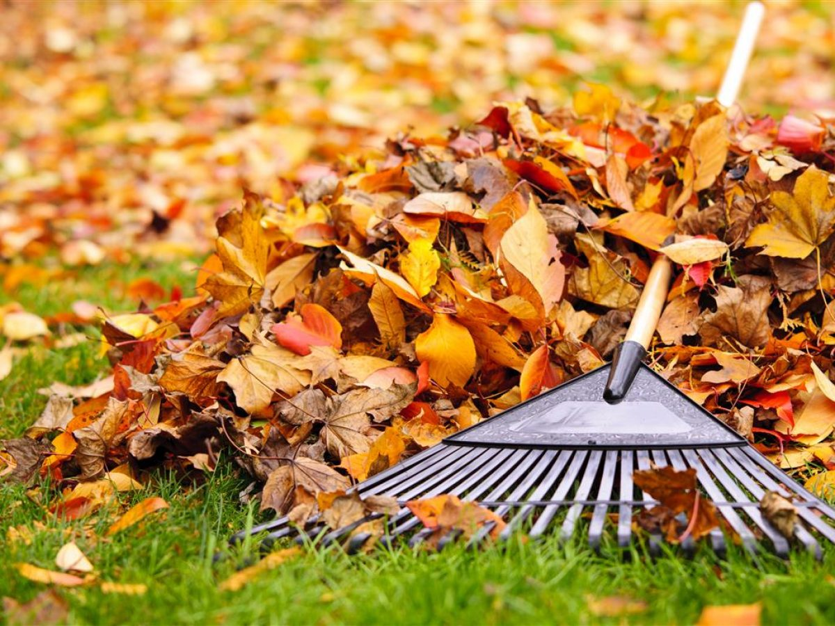 5 Essential Fall Gardening Tips You Should Know Outdoor Chief