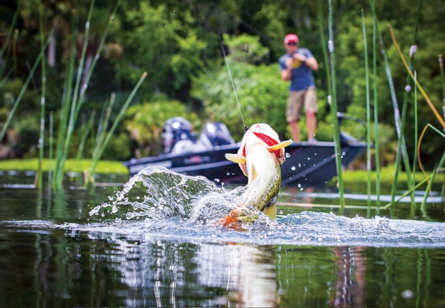 bass-fishing-from-a-boat