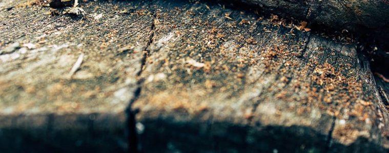 wood-chipper-log