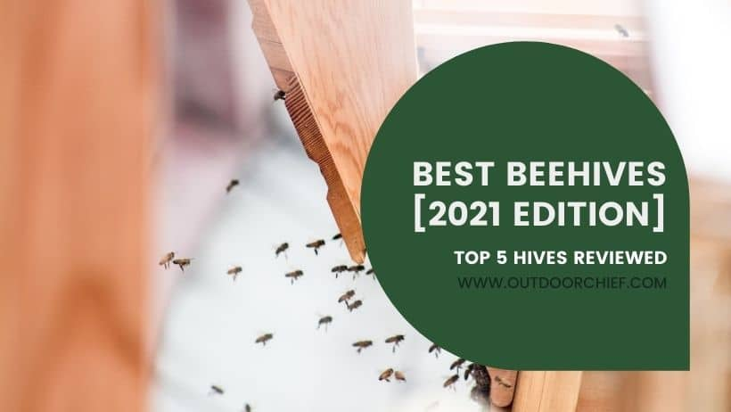 best beehives featured