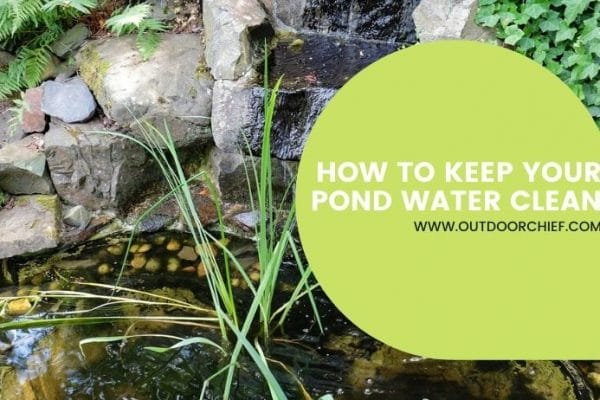 keeping your pond water clean